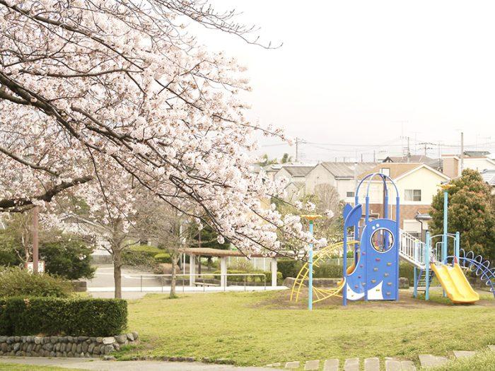 大谷近隣公園 桜 海老名