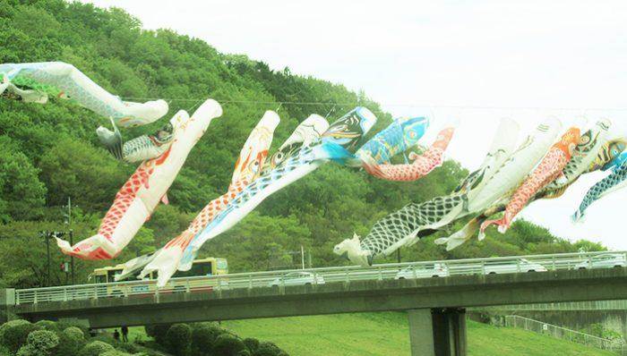 厚木の鯉のぼり 若宮公園