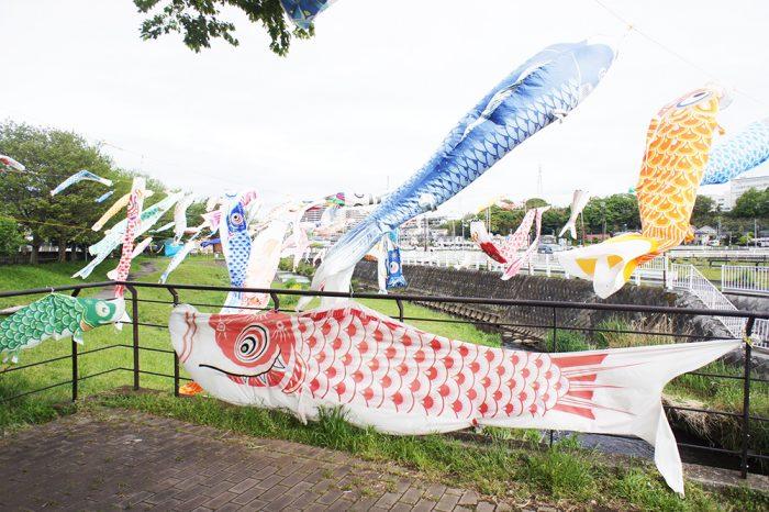 厚木:恩曽川地蔵橋親水広場の鯉のぼり