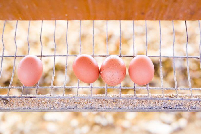 清水鶏園のたまご